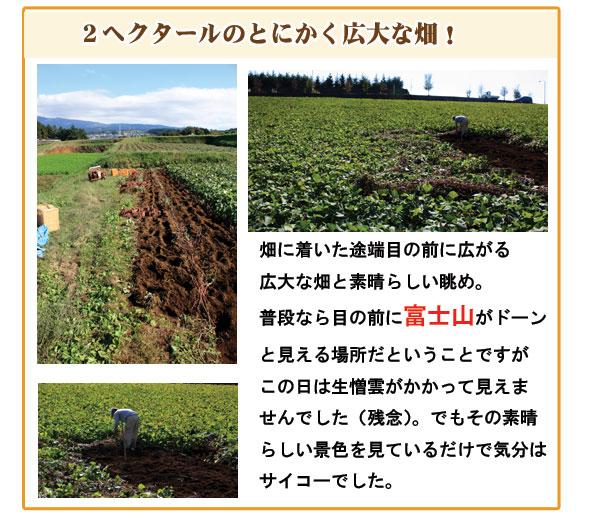 2ヘクタールの広大な畑